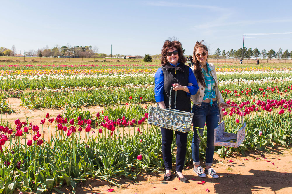Texas tulip farm